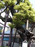 4_1_shiinoki0013